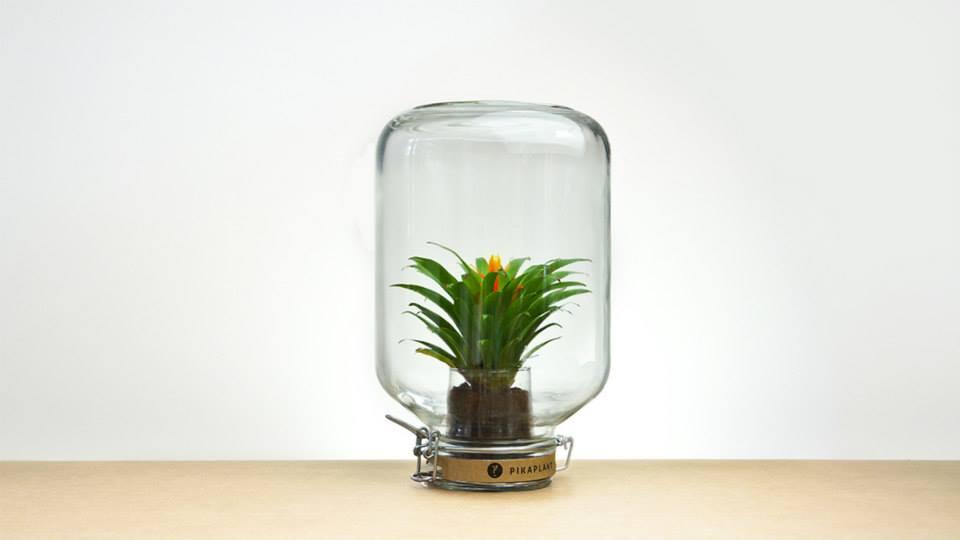 pikaplant 'Jar'