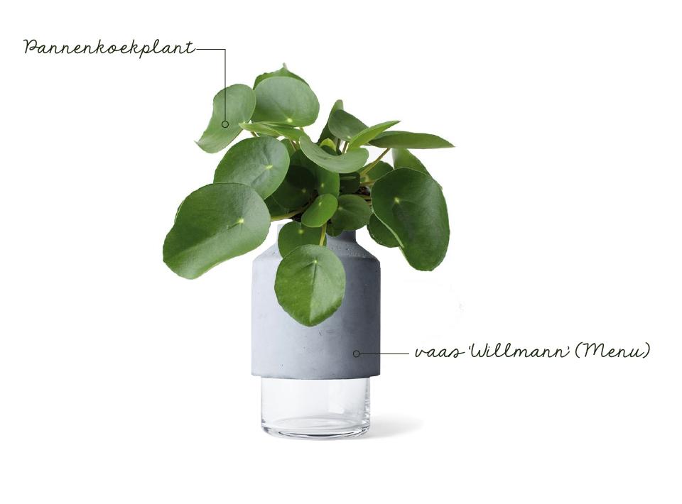 Planten Op Slaapkamer : Interieurtrend groen in je slaapkamer design